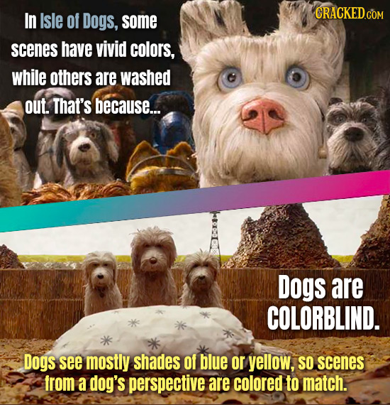 In Isle Of Dogs, some scenes have vivid colors, while others are washed out. That's because... Dogs are COLORBLIND. Dogs see mostly shades Of blue or