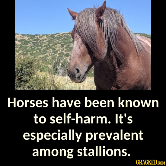 Horses have been known to self-harm. It's especially prevalent among stallions. CRACKED.COM