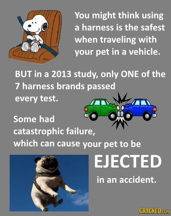 You might think using a harness is the safest when traveling with your pet in a vehicle. BUT in a 2013 study, only ONE of the 7 harness brands passed