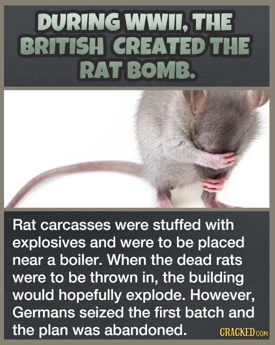 DURING WWIl, THE BRITISH CREATED THE RAT BOMB. Rat carcasses were stuffed with explosives and were to be placed near a boiler. When the dead rats were