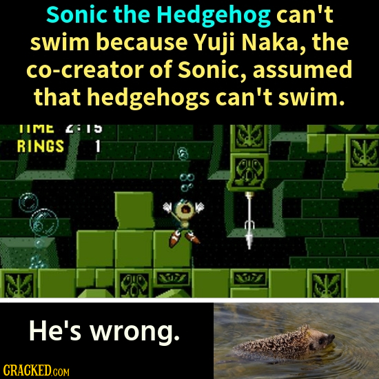 Sonic the Hedgehog can't swim because Yuji Naka, the co-creator of Sonic, assumed that hedgehogs can't swim. IIME 4615 RINGS 1 33 N He's wrong.