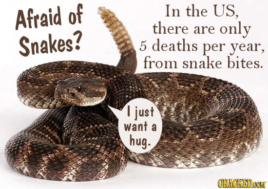 Afraid of In the US, there are only Snakes? 5 deaths per year, from snake bites. I just want a hug. CRACKEDCON