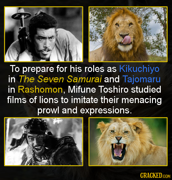 To prepare for his roles as Kikuchiyo in The Seven Samurai and Tajomaru in Rashomon, Mifune Toshiro studied films of lions to imitate their menacing p