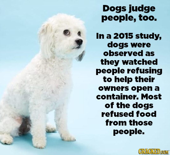 Dogs judge people, too. In a 2015 study, dogs were observed as they watched people refusing to help their owners open a container. Most of the dogs re