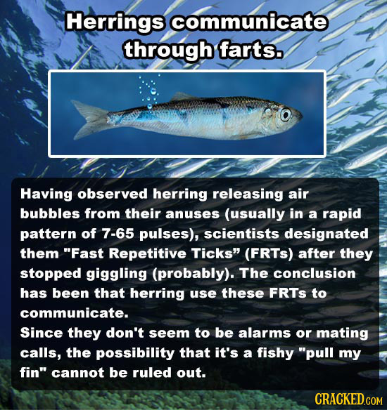 Herrings communicate through farts. Having observed herring releasing air bubbles from their anuses (usually in a rapid pattern of 7-65 pulses), scien