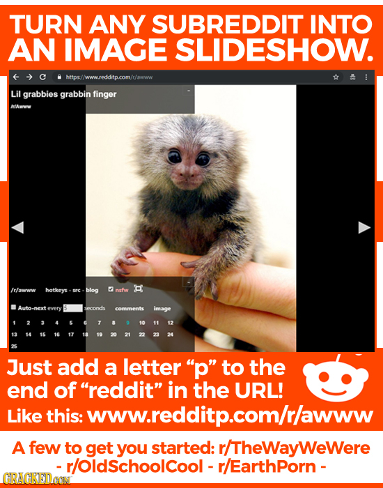 TURN ANY SUBREDDIT INTO AN IMAGE SLIDESHOW. https//www.redditp.com/r/awww Lil grabbies grabbin finger MAvoow /rawww hotkeys sre blog nsfw Auto every s