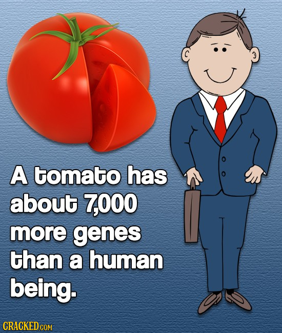 A tomato has about 7,000 more genes than a human being. CRACKED COM