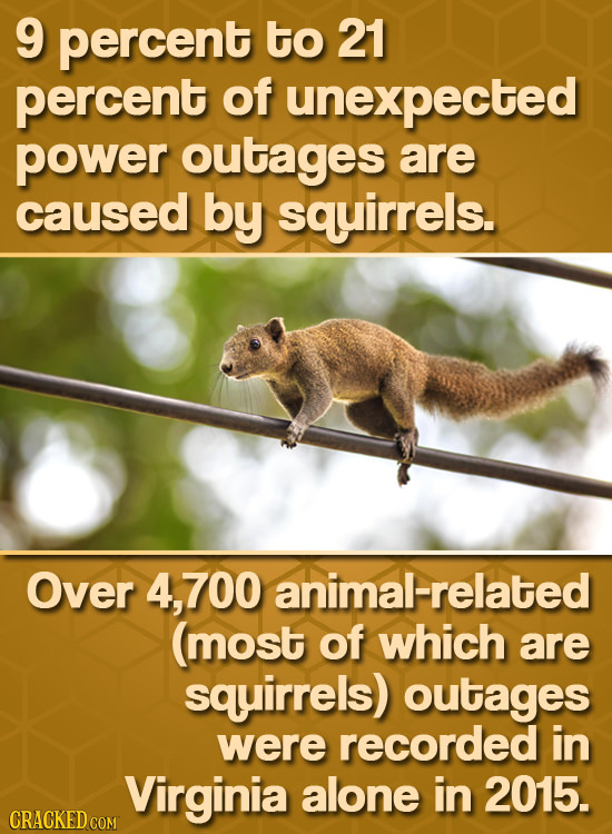 9 percent to 21 percent of unexpected power outages are caused by squirrels. Over 4,700 animal-related (most of which are squirrels) outages were reco