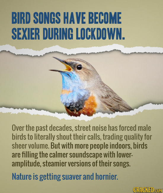 BIRD SONGS HAVE BECOME SEXIER DURING LOCKDOWN. Over the past decades, street noise has forced male birds to literally shout their calls, trading quali
