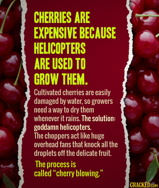 CHERRIES ARE EXPENSIVE BECAUSE HELICOPTERS ARE USED TO GROW THEM. Cultivated cherries are easily damaged by water, SO growers need a way to dry them w