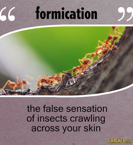 formication  the false sensation of insects crawling across your skin CRACKED COM