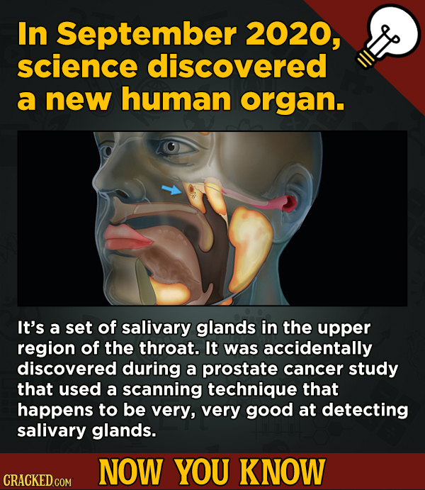 13 Scintillating Now-You-Know Movie Facts and General Trivia - In September 2020, science discovered a new human organ.