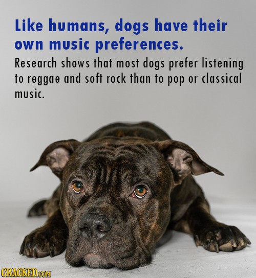 Like humans, dogs have their own music preferences. Research shows that most dogs prefer listening to reggae and soft rock than to pop or classical mu