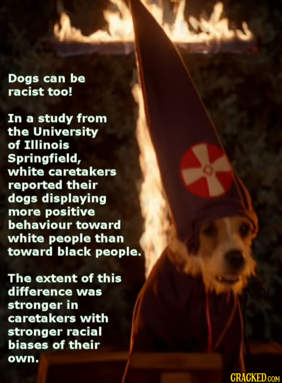 Dogs can be racist too! In a study from the University of Illinois Springfield, white caretakers reported their dogs displaying more positive behaviou