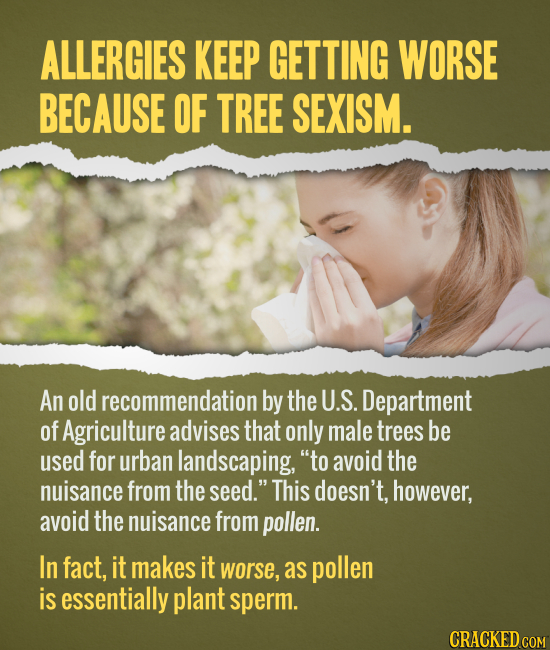 ALLERGIES KEEP GETTING WORSE BECAUSE OF TREE SEXISM. An old recommendation by the U.S. Department of Agriculture advises that only male trees be used