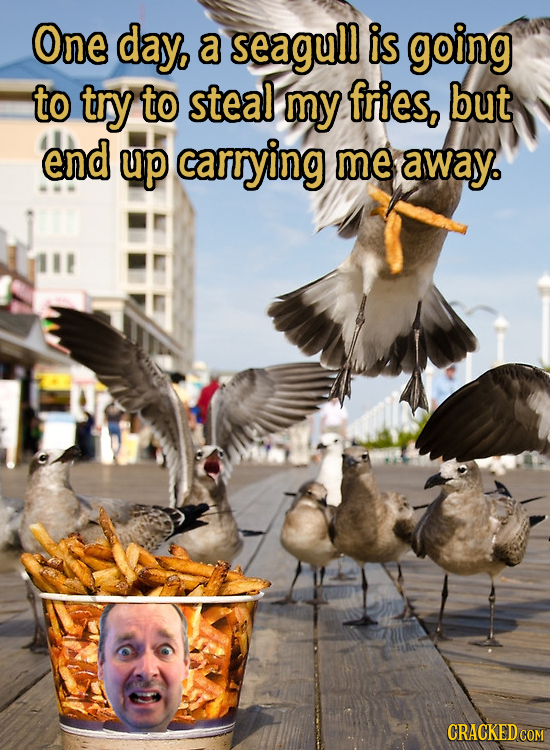 One day, a seagull is going to try to steal my fries, but end up carrying me away. CRACKED COM