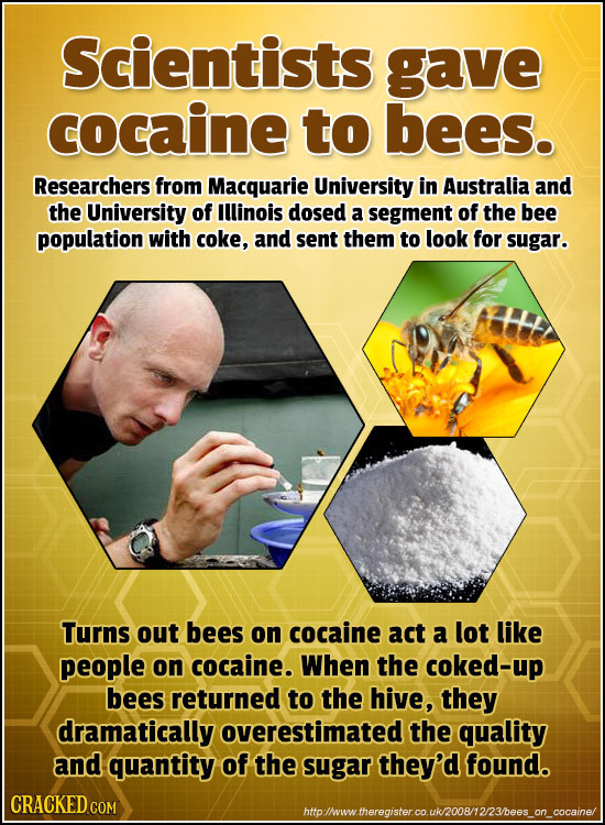 Scientists gave cocaine to bees. Researchers from Macquarie University in Australia and the University of Illinois dosed a segment of the bee populati