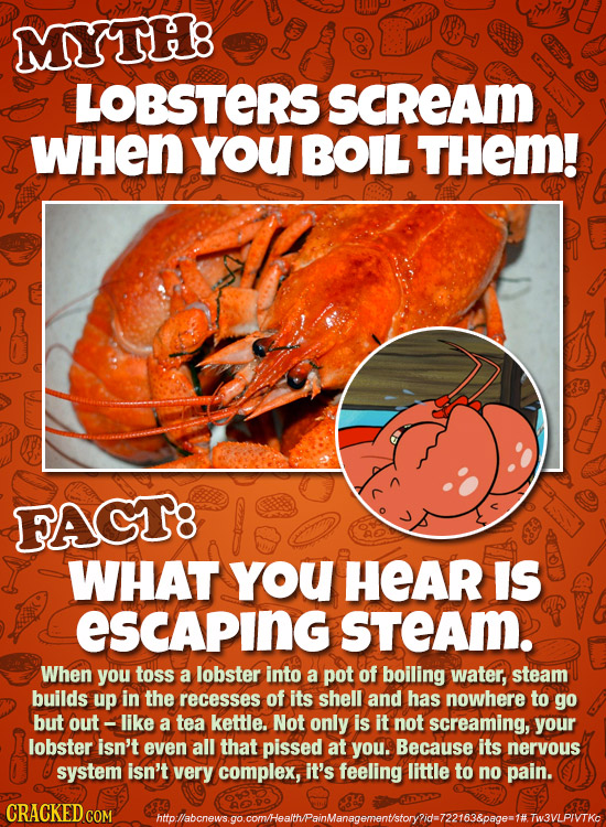 MYTHB LOBSTERS SCREAm WHEN you BOIL THEM! FAGT8 WHAT You HEAR IS ESCaping sTeAm. When you toSs a lobster into a pot of boiling water, steam builds up