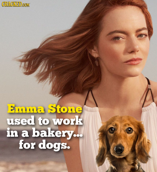 CRACKED Emma Stone used to work in a bakery... for dogs.