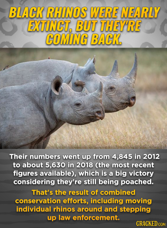 BLACK RHINOS WERE NEARLY EXTINCT, BUT THEY'RE COMING BACK. Their numbers went up from 4,845 in 2012 to about 5,630 in 2018 (the most recent figures av