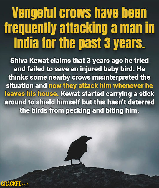Vengeful crows have been frequently attacking a man in India for the past 3 years. Shiva Kewat claims that 3 years ago he tried and failed to save an
