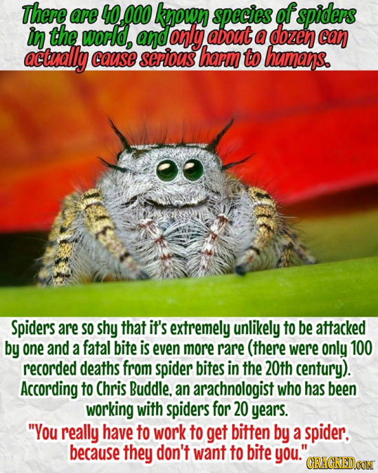 There are 4O 000 knoun species of spiders in the world, and orly adout a dozen can actually cause serious harm to bhamans. Spiders are SO shy that it'