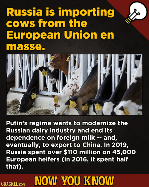 Now You Know! 13 Facts About Movies And General Trivia To Un-Bore You - Russia is importing COWS from the European Union en masse.