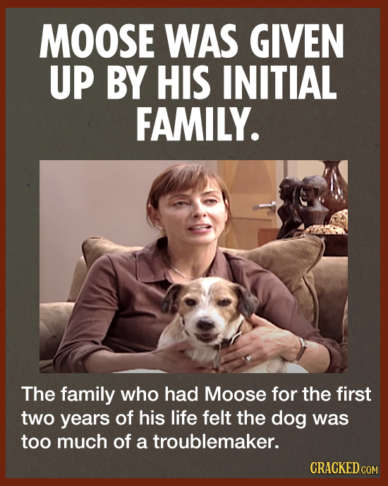 MOOSE WAS GIVEN UP BY HIS INITIAL FAMILY. The family who had Moose for the first two years of his life felt the dog was too much of a troublemaker. CR