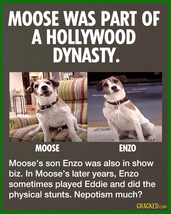 MOOSE WAS PART OF A HOLLYWOOD DYNASTY. MOOSE ENZO Moose's son Enzo was also in show biz. In Moose's later years, Enzo sometimes played Eddie and did t