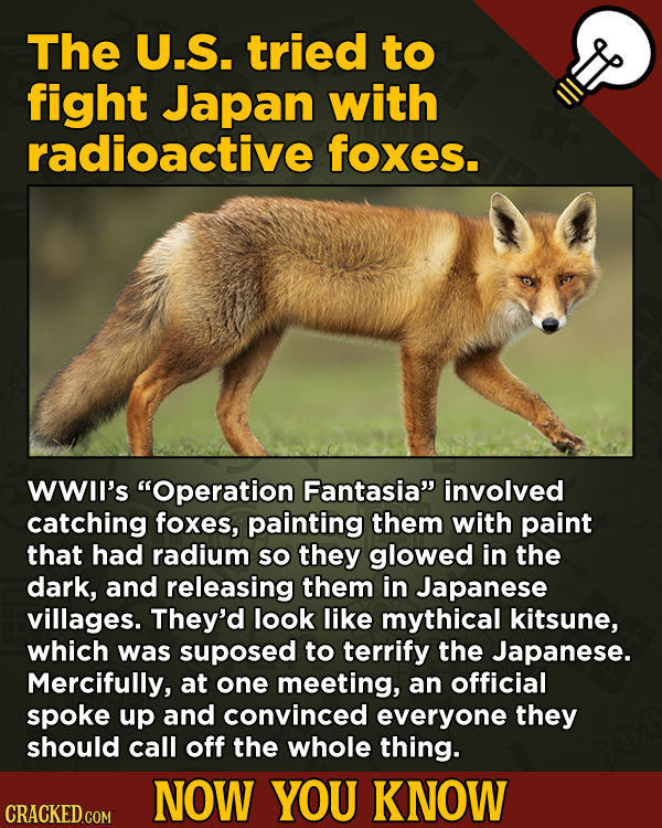 Now You Know! 13 Facts About Movies And General Trivia To Un-Bore You - The U.S. tried to fight Japan with radioactive foxes.
