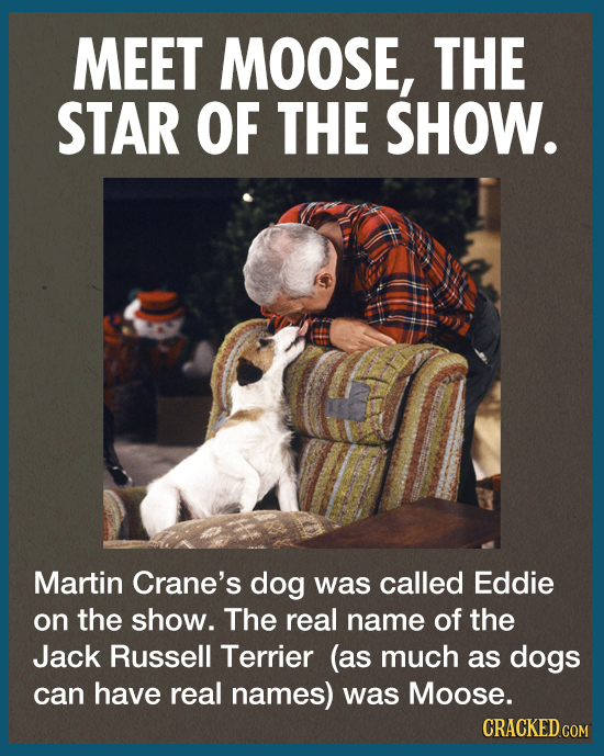 MEET MOOSE, THE STAR OF THE SHOW. Martin Crane's dog was called Eddie on the show. The real name of the Jack Russell Terrier (as much as dogs can have