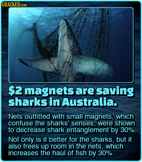 CRACKEDG COM $2 magnets are saving sharks in Australia. Nets outfitted with small magnets, which confuse the sharks' senses, were shown to decrease sh