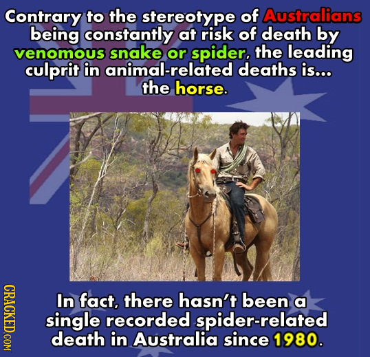 Contrary to the stereotype of Australians being constantly at risk of death by venomous snake or spider. the leading culprit in animal-related deaths