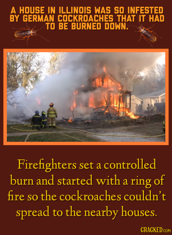 A HOUSE IN ILLINOIS WAS SO INFESTED BY GERMAN COCKROACHES THAT IT HAD TO BE BURNED DOWN. Firefighters set controlled a burn and started with ring of a