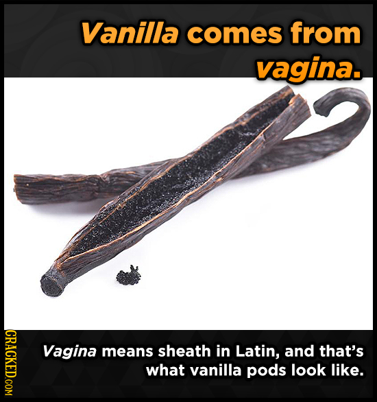 Vanilla comes from vagina. CRACKED.COM Vagina means sheath in Latin, and that's what vanilla pods look like.