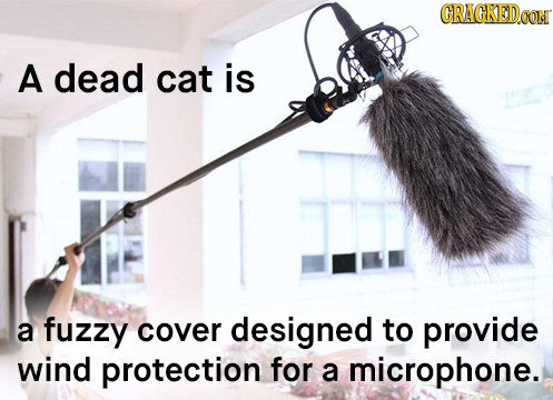 CRACKEDeG OON A dead cat is a fuzzy cover designed to provide wind protection for a microphone.