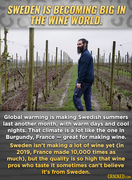 SWEDEN IS BECOMING BIG IN THE WINE WORLD. Global warming is making Swedish summers last another month, with warm days and cool nights. That climate is