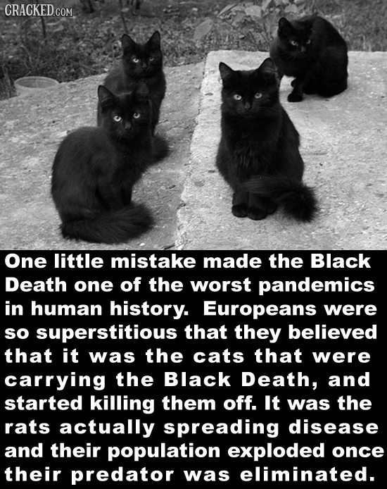 CRACKED COM One little mistake made the Black Death one of the worst pandemics in human history. Europeans were SO superstitious that they believed th