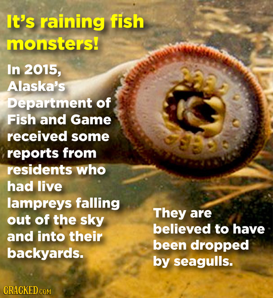 It's raining fish monsters! In 2015, Alaska's Department of Fish and Game received some reports from residents who had live lampreys falling They are