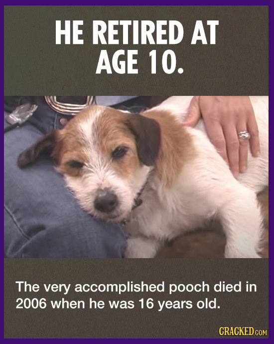 HE RETIRED AT AGE 10. The very accomplished pooch died in 2006 when he was 16 years old. CRACKED.COM