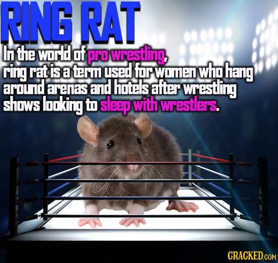 RING RAT In the world of Pro wrestling ring rat is who a term used for women hang around arenas and hotels after wTestling shows looking to sleep with