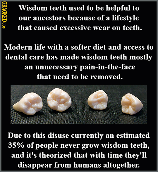 DAOT Wisdom teeth used to be helpful to our ancestors because of a lifestyle that caused excessive wear on teeth. Modern life with a softer diet and a