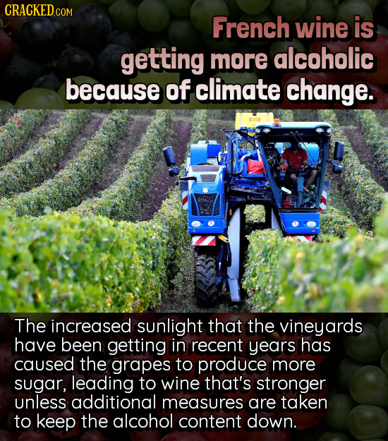 CRACKEDco COM French wine is getting more alcoholic because of climate change. The increased sunlight that the vineyards have been getting in recent y