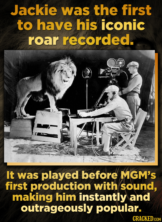Jackie was the first to have his iconic roar recorded. It was played before MGM's first production with sound, making him instantly and outrageously p