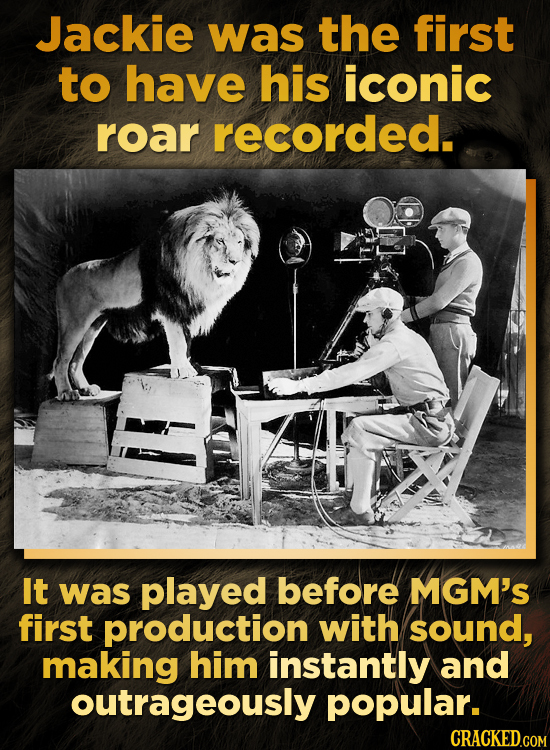 The MGM Lion Escaped Death Like 6 Different Times
