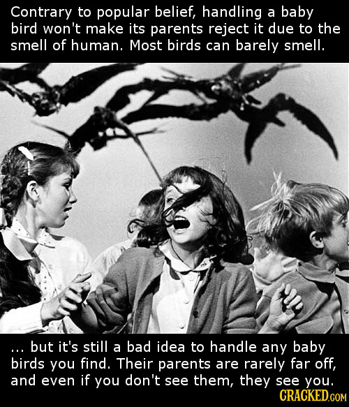 Contrary to popular belief, handling a baby bird won't make its parents reject it due to the smell of human. Most birds can barely smell. ...but it's