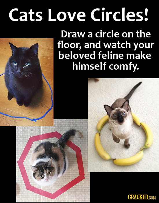 Cats Love Circles! Draw a circle on the floor, and watch your beloved feline make himself comfy. CRACKED.COM