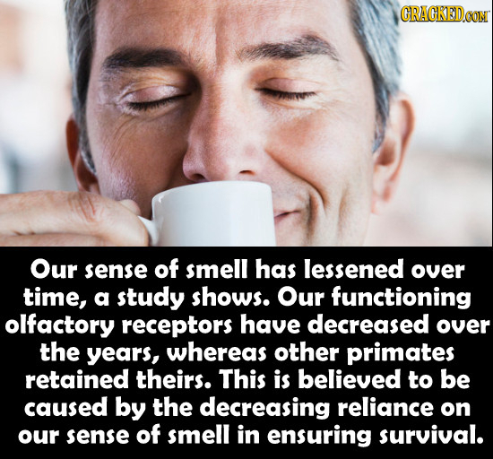 CRACKEDCON Our sense of smell has lessened over time, a study shows. Our functioning olfactory receptors have decreased over the years, whereas other