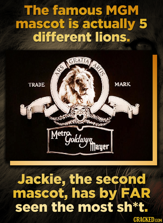 The famous MGM mascot is actually 5 different lions. GRATIA ARTIS ARS TRADE MARK Metra goldwyh Mayer Jackie, the second mascot, has by FAR seen the mo