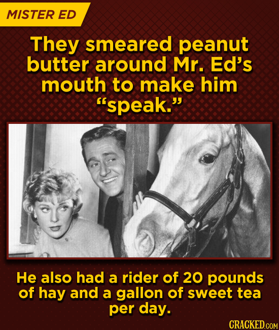 MISTER ED They smeared peanut butter around Mr. Ed's mouth to make him spEAK. He also had a rider of 20 pounds of hay and a gallon of sweet tea per